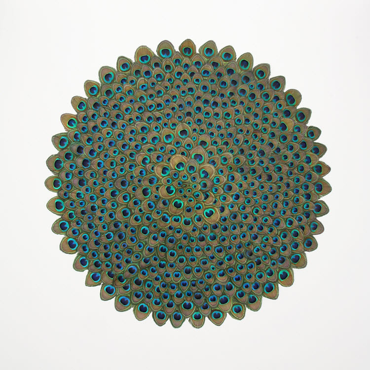 """Peacock feather Mandala""  framed peacock feathers on gesso board 120 cm 120 cm"